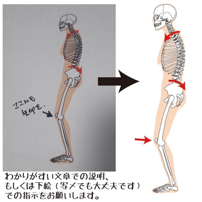 筋肉・骨格図の修正や追記をします 制作・公開している筋肉・骨格図のカスタム修正をします。 イメージ1
