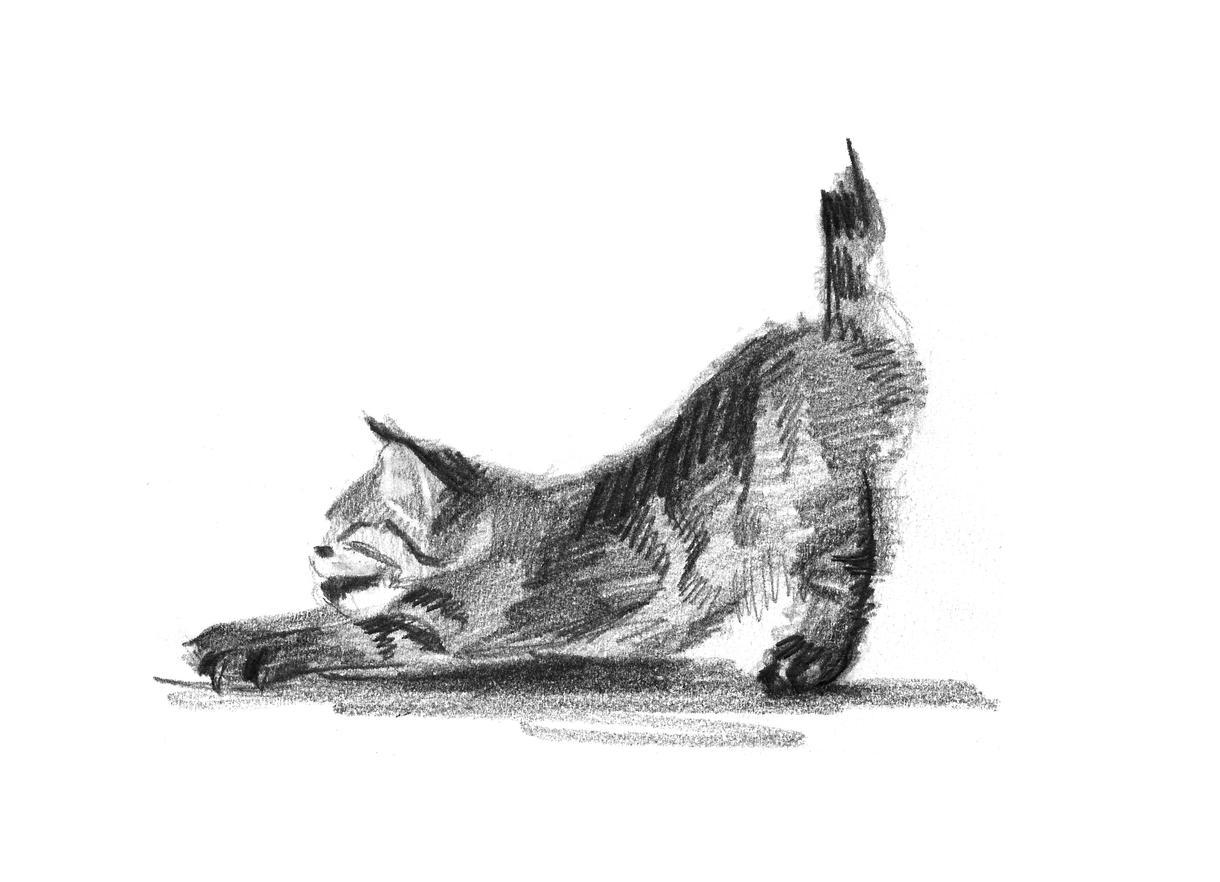 美大出身者がかわいいペットの鉛筆画を描きます ペットのお誕生日や記念に、オリジナルの絵を作成したい方へ