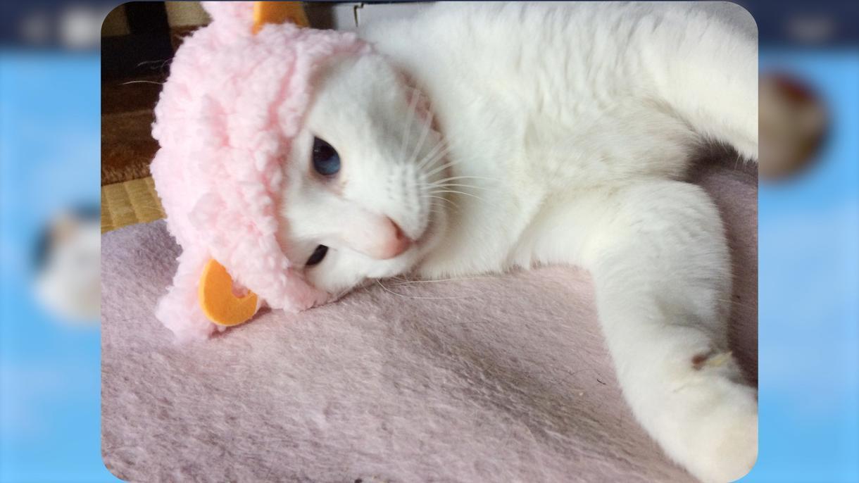 猫好き必見!LINE風オープニングムービー作ります 飼っている猫ちゃんがトークをしながらお二人の挙式をお祝い♪