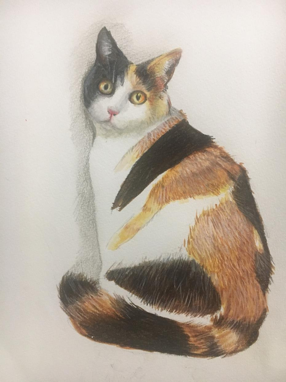 ペットの絵かきます 可愛いく書きます。プレゼントではがきの代わりにいかがですか