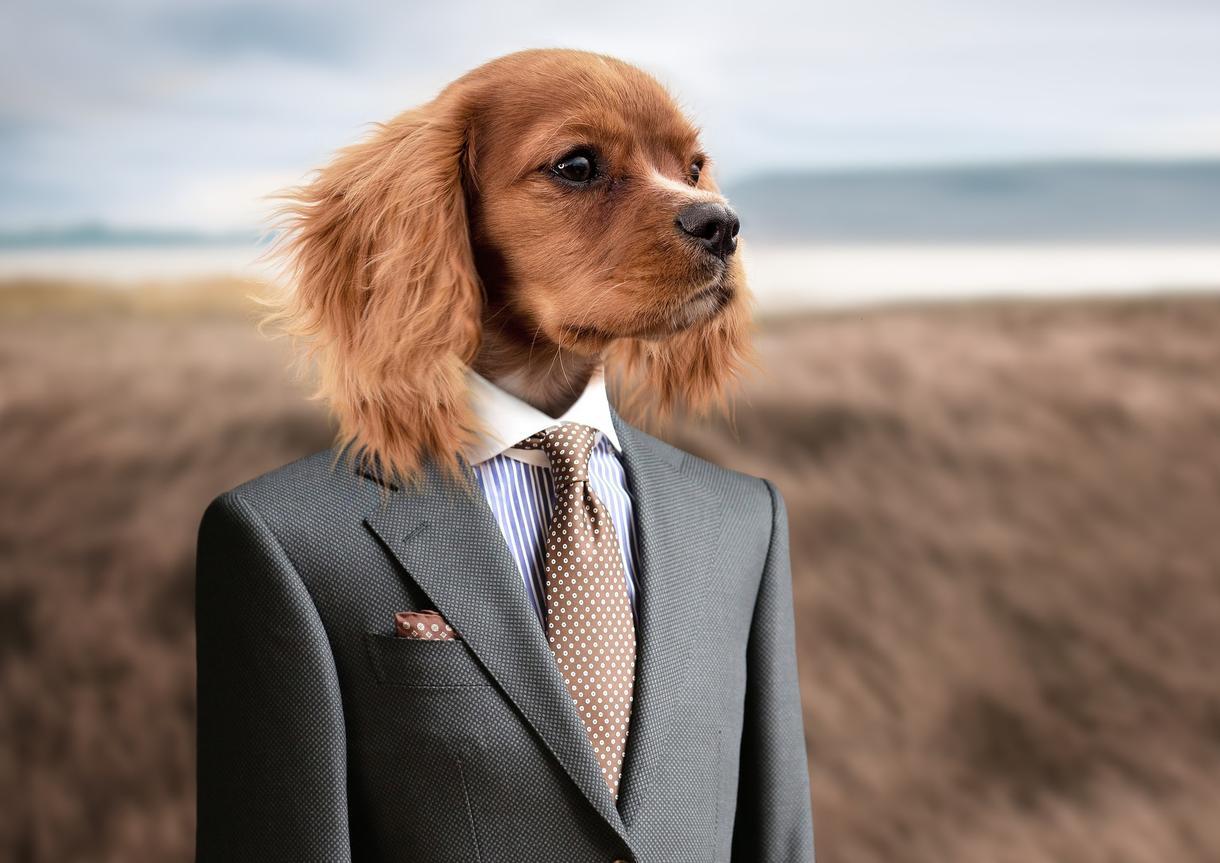 ブログで使える犬のフリー画像50枚を集めます 様々なシチュエーションに対応!!可笑しい!可愛い!!犬の画像 イメージ1