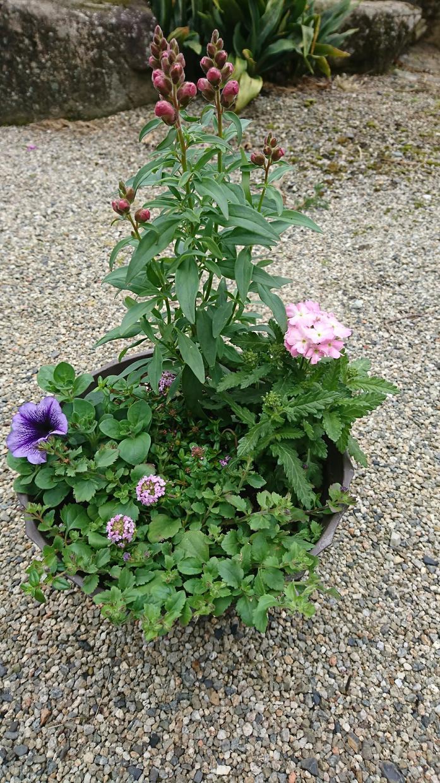 花や野菜の園芸相談いたします 花や野菜のお困り事の相談、初めての方へアドバイス致します。