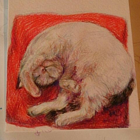 小動物のイラスト描き〼