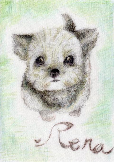 あなたのペット似顔絵、懐かしの幼めに描きます!