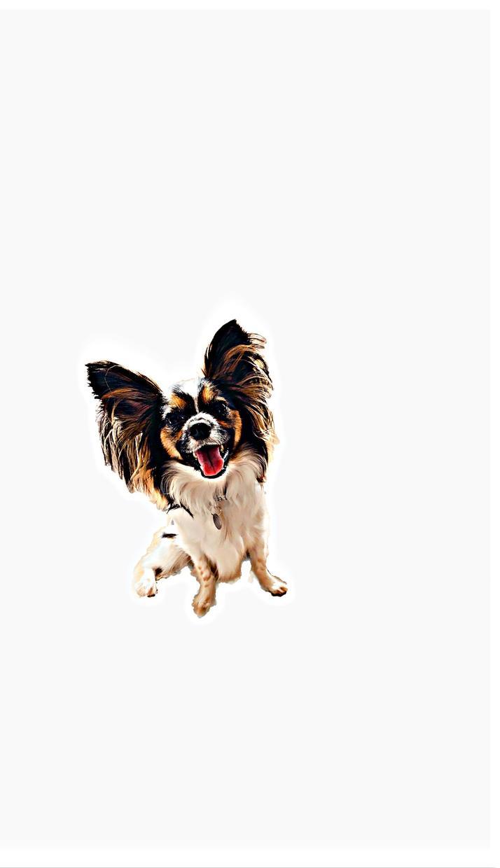 愛犬、ペットのシンプルで可愛い画像作ります できる限りお客様のご要望に沿います!年賀状にも添付可!