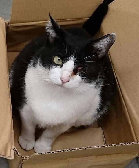 片目のない元野良猫の画像を提供いたします ブログや広告、病気の研究や解説などに イメージ1