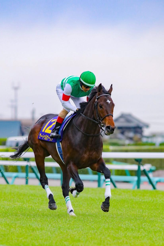 競馬予想!!中央競馬 軸馬を教えます 本命、対抗、穴 問わず馬は動物勝てる戦しかしない性分です。