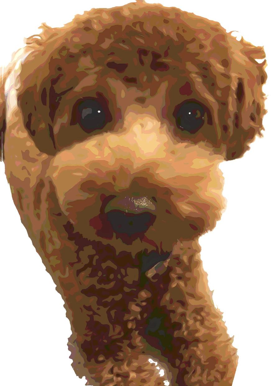あなたの愛犬、愛猫をイラスト化します あなたのペットをそっくりそのままイラスト化します*