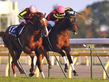 札幌2歳ステークス予想馬3頭教えます 札幌2歳ステークスの印をお伝えします。