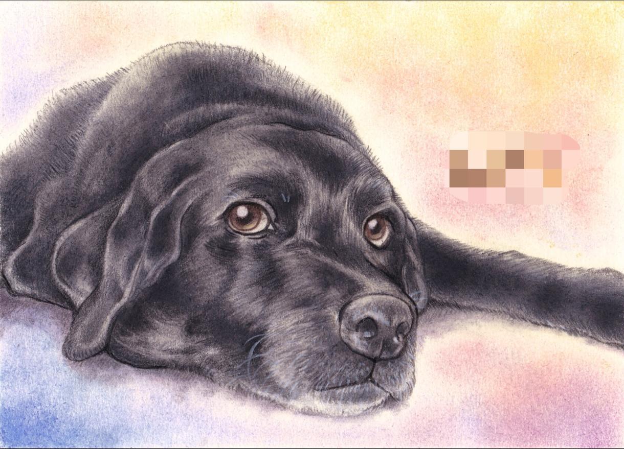 いやしのペット似顔絵、大切な家族をお描きします 虹の橋を渡ったペットの思い出ペットロスの方へのプレゼントに