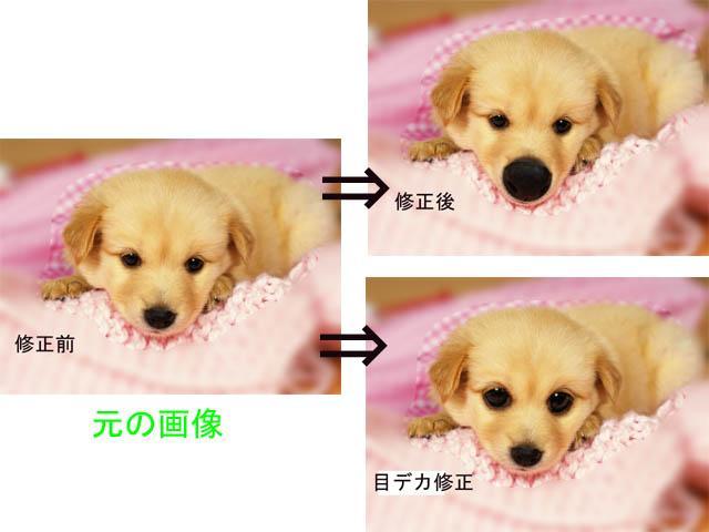 """可愛いペットの""""うっとりデカ鼻""""画像作ります。 イメージ1"""