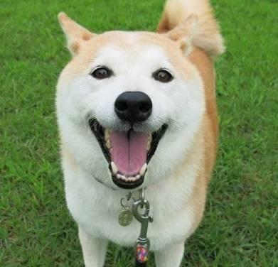 ご家族の犬の似顔絵描きます かわいい家族を携帯の待ち受け用にしたいあなたへ