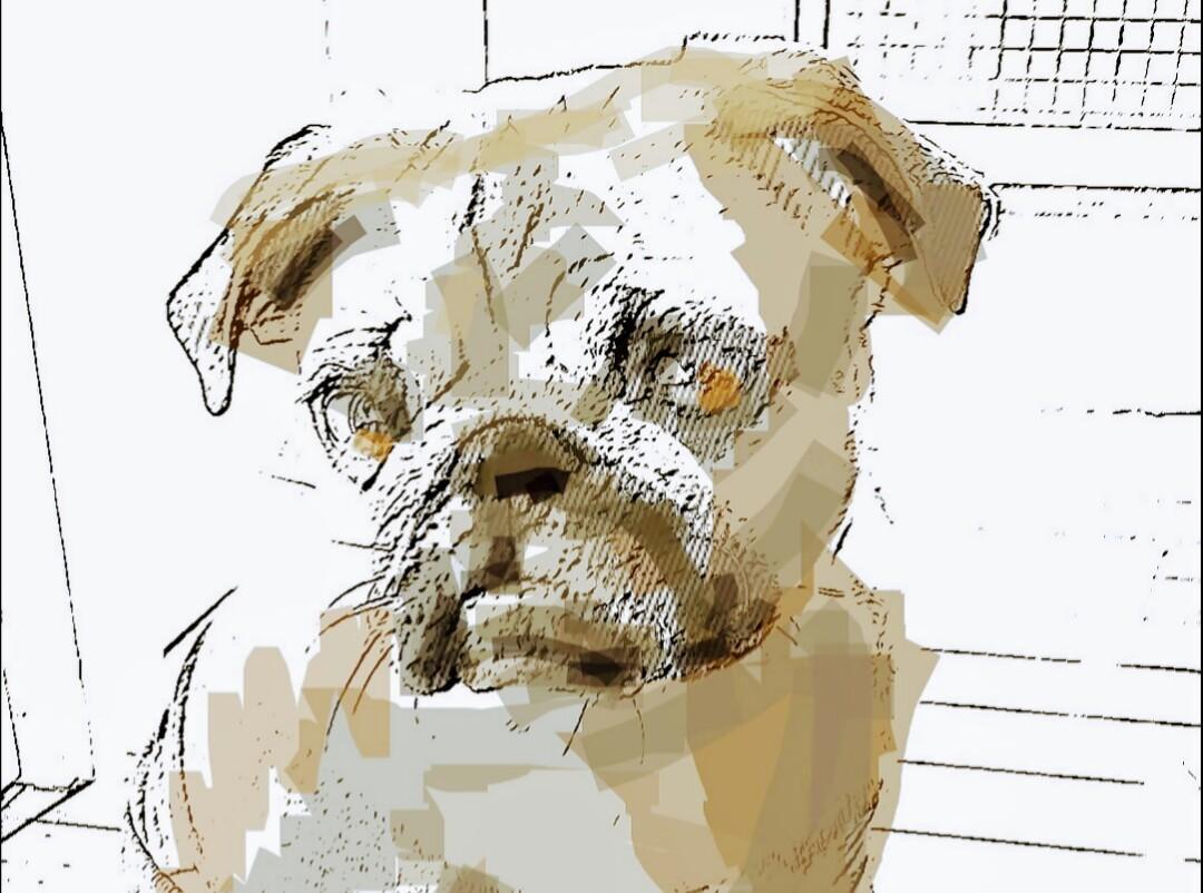 オプションで色を選べる!ペットの画像加工をします 人と違う作風でオシャレに描いてほしい方にオススメ!