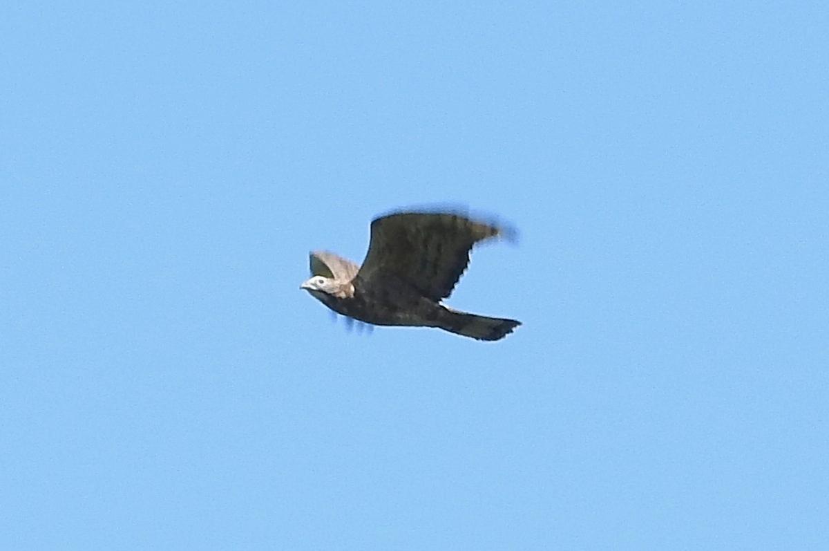 お手頃価格★日本で撮影した野鳥の種類を特定します 種類が分からないままの野鳥の写真はありませんか?