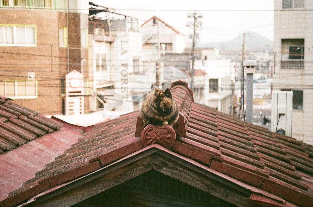ポートレート、尾道の猫、スナップ写真を販売します 尾道の風景や猫、素敵なポートレートと出会いたいあなたへ