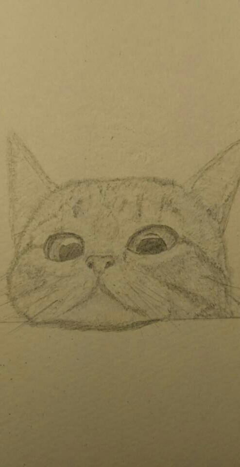 動物の絵を描きます 我が家のペットを作品として残したい方へ