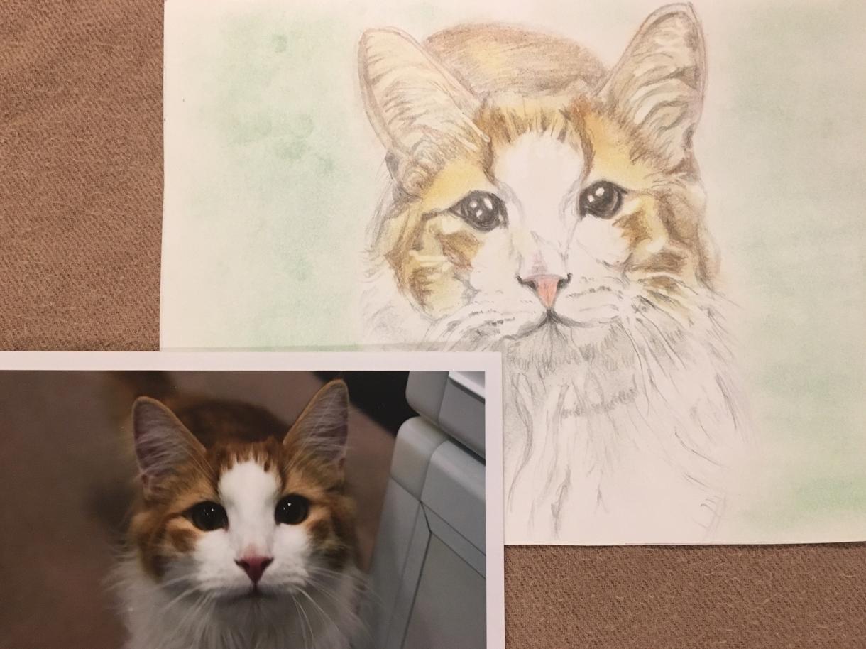 ペットのイラストをアナログで描きます 動物のイラストを色鉛筆やパステルで