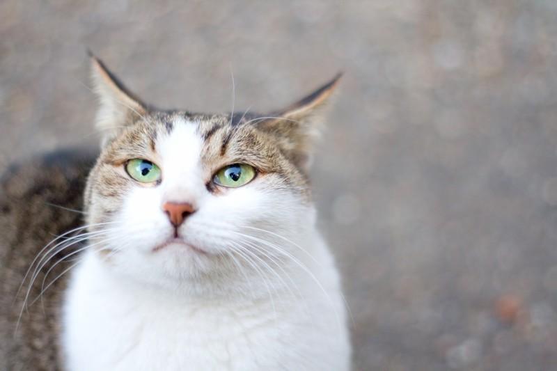 おたくの猫ちゃん切り抜きます 大好きな猫ちゃんの写真をもっと可愛く!