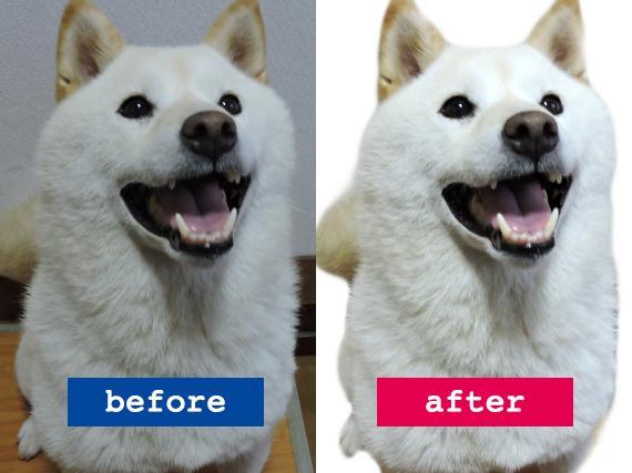 ちょっとした写真の加工・修正をします。