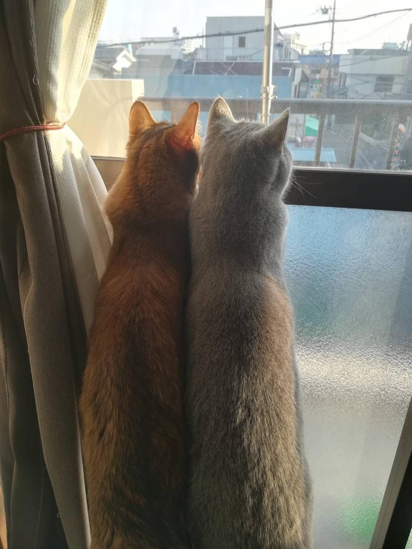 猫の画像を提供致します 猫好きの方!自宅の猫2匹の画像を提供いたします!