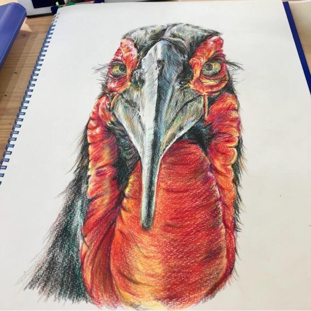 色鉛筆:動物をリアルに描きます 指定あればモノクロや単色などでも可能です。