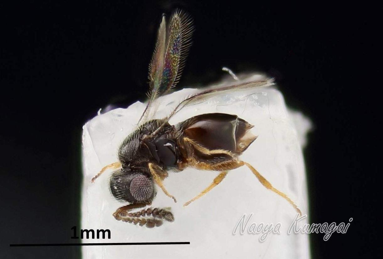 昆虫標本作製します あなたの思い出の昆虫…標本として残しませんか?