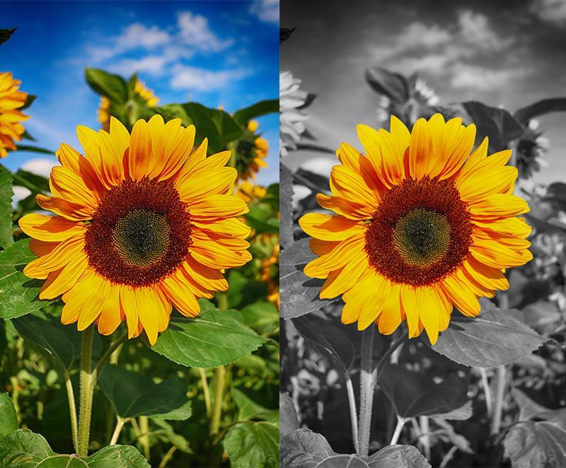 写真の修正をします 集合写真や風景写真がレタッチの力で、より鮮やかな思い出に。