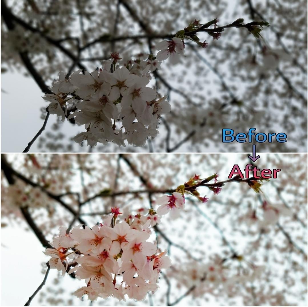写真・画像の加工や補正を行います 素敵な写真をオリジナリティある写真へ