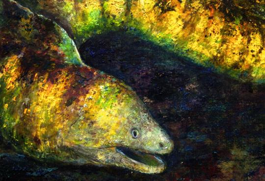 ✨自慢のペット、お魚のイラスト飾りませんか?