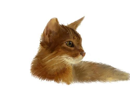 ペットの写真をイラスト化します ペットの思い出を残したい方に。