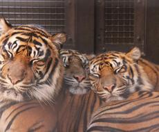 生態 面白い動物