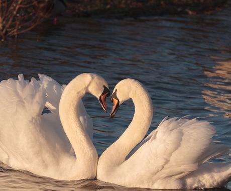 恋愛に特化したボリュームある占い、質問もできます ルノルマンカードと数秘術であなたの恋愛をしっかりと占います イメージ1