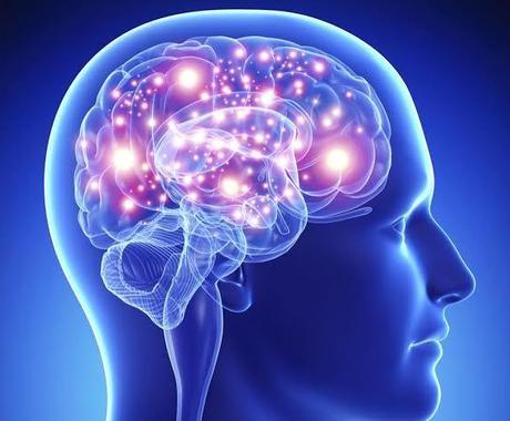これって脳科学的にどうなの?にお答えします 脳科学の研究経験から、気になる脳の仕組みについて雑学を提供 イメージ1