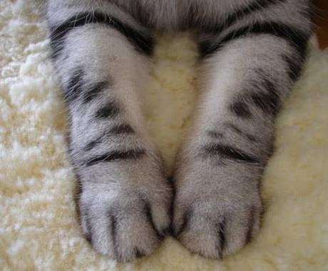 忙しい方へ!代わりにやります 猫の手も借りたい!そんな時、お手伝いさせていただきます! イメージ1