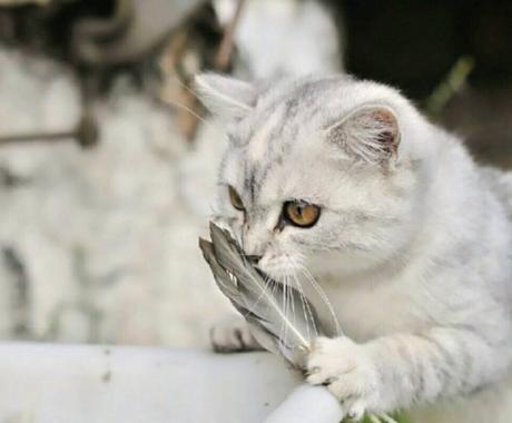 家族としての動物(爬虫類以外)の気持ちをみます ◇アニマルコミュニケーション◇犬猫のきもち◇ イメージ1