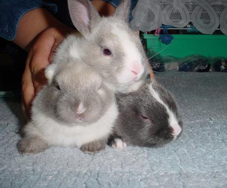 あなたのお家に総額1万円でウサギ☆導入サポート! イメージ1