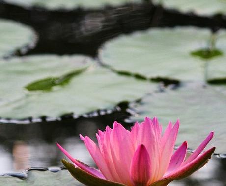 貴方の悩みに仏教的な回答を、小学生でも分かるくらい平易にお出しします。 イメージ1