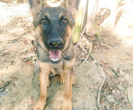 愛犬との関係で不安や疑問はありませんか?解決します 褒める訓練、警察犬の訓練など様々な経験があるため幅広く対応 イメージ1