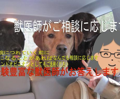 獣医師があなたのご相談を承ります 大切なご家族と楽しい日々を過ごすために心配事解決 イメージ1