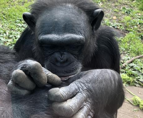動物園に就職したい!転職したい!疑問に答えます 動物園業界のウラ側や絶対に避けるべき動物園についてお答え! イメージ1