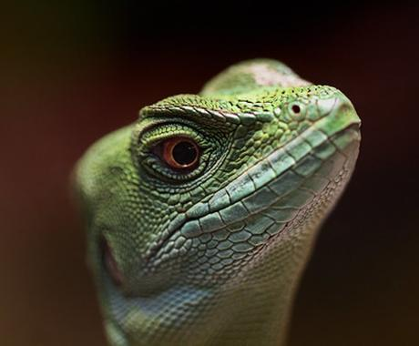 爬虫類に関する相談、すべて聞きます、答えます 飼育、輸出入、譲渡、販売、買取、駆除、何でも構いません! イメージ1