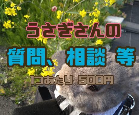 飼育歴12年!!うさぎの飼育相談受け付けます 飼育方法、体調不良、しつけ全般、爪切り イメージ1