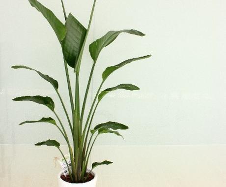 園芸植物の疑問・質問、何でもお答えします 植物栽培の「困ったこと」にグリーンアドバイザーがお答えします イメージ1