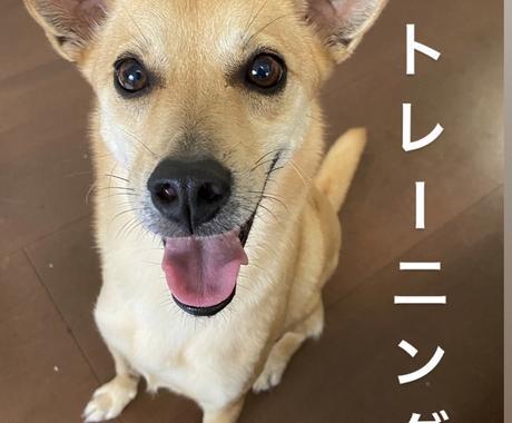 犬の問題行動を解決、トレーニングいたします 褒めて伸ばすモチベーショナルトレーニングでお教えします イメージ1