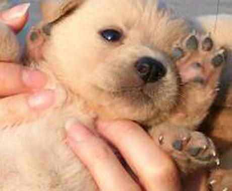【犬のしつけでお困りの方】叱らずにしつけする方法を提案いたします(*´∀`*) イメージ1