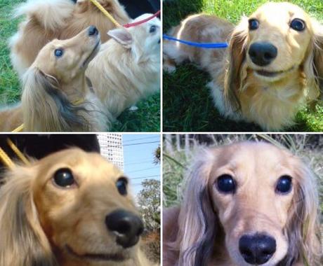 奇跡の保護犬が与えてくれたものをお届けします セラピー犬♡目が見えなくても歩けなくても与えられるもの☆ イメージ1