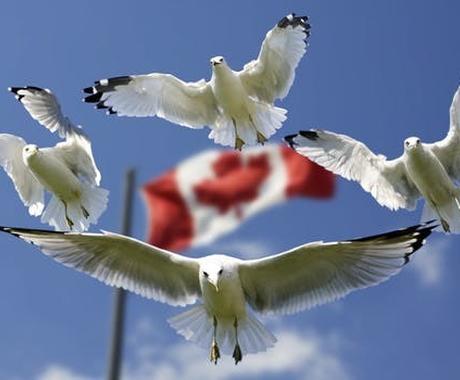 カナダ人が英文添削します あなたの英文を、ネイティブにしっかり伝わる文章にします イメージ1