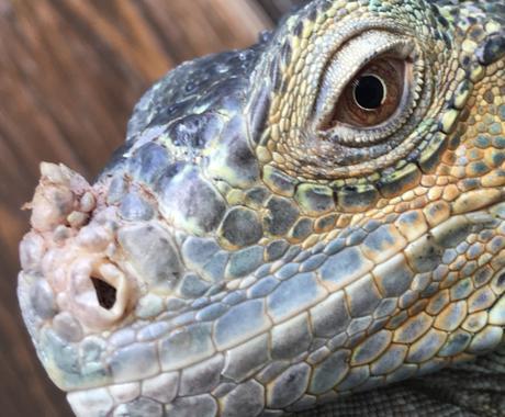 爬虫類の相談のります 爬虫類専門店が爬虫類の飼い方などなんでもご相談にのります。 イメージ1