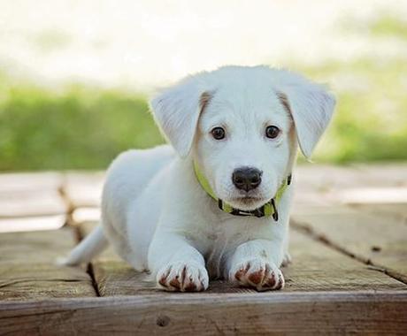 大切なペット家族に暖かいレイキをお届けします いつも全力で癒してくれるペット家族にレイキを贈りませんか? イメージ1