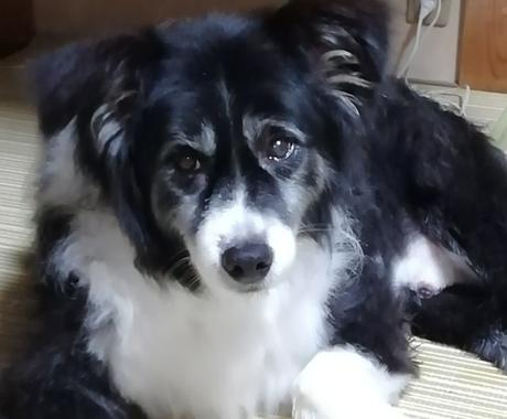 家庭犬トレーナーがお悩みに答えます しつけの仕方や困った癖を直したいなど、何でも相談ください イメージ1